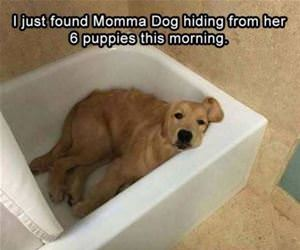 momma dog was hiding funny picture