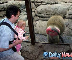 Monkey Hates Tourist