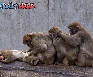 Monkey Butt Inspectors