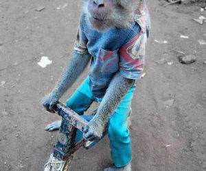 Monkey Riding a Bike