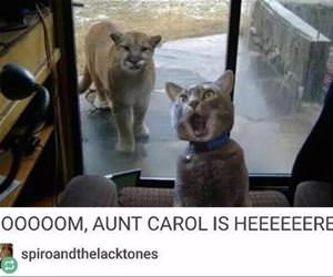 moooom aunt carol is here funny picture