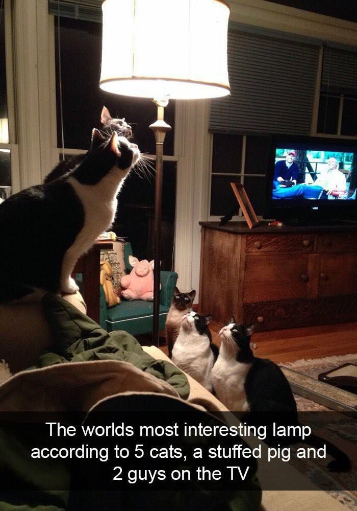 most interesting lamp
