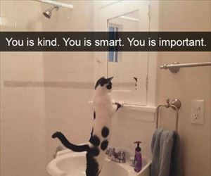 motivation cat