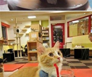 munchkin cats funny picture