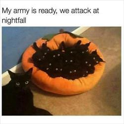 my army is ready ... 2
