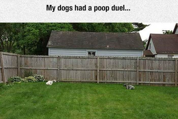 my dogs had a poop duel