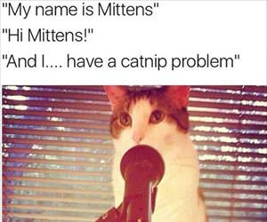 my name is mittens
