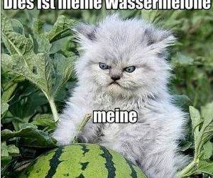 Dis Mein Watermelon funny picture
