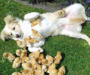 my dog gets all the chicks funny picture