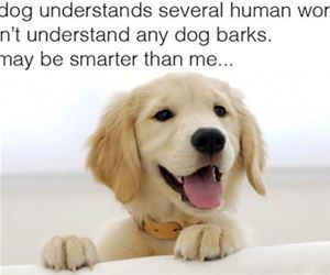 my dog may be smarter than me funny picture