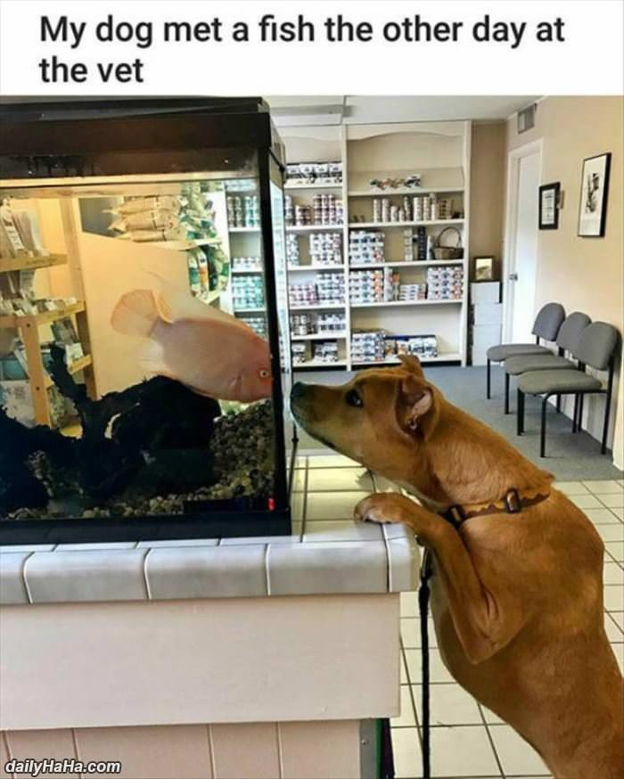 my dog met the fish funny picture
