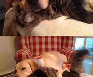 my dog uses my cat as a pillow funny picture