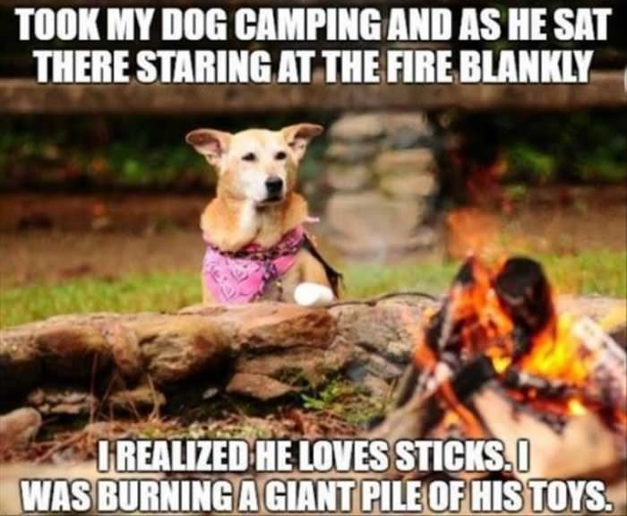 my dog watching the fire funny picture