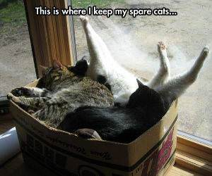 my spare cats funny picture