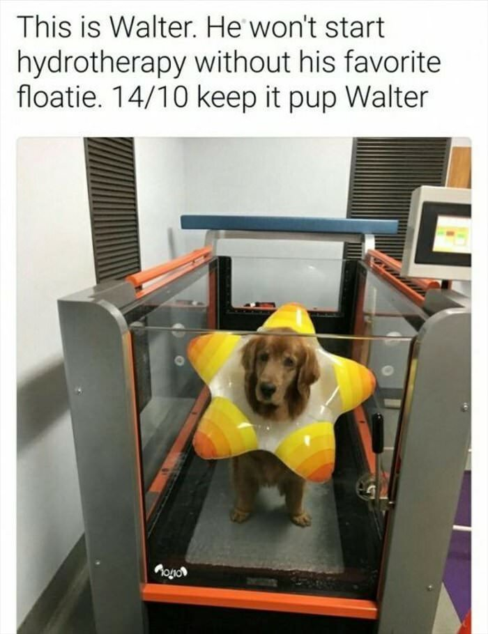 need my favorite floatie