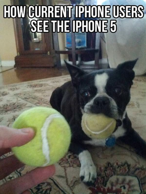 Iphone 5 funny picture
