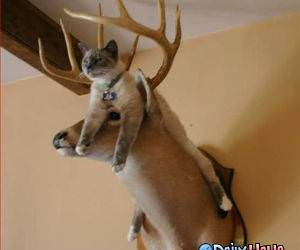 Cat bed - deer head