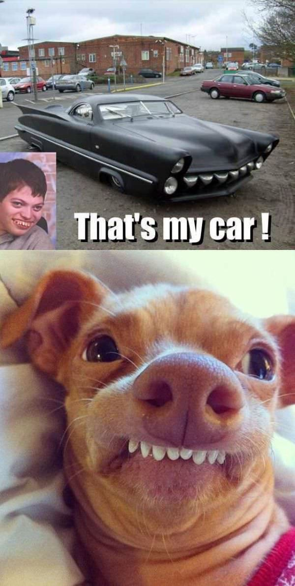 Nice Car Dog funny picture