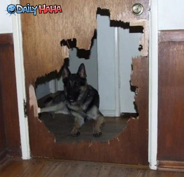 Nice Doggy Door