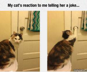 nice joke human funny picture