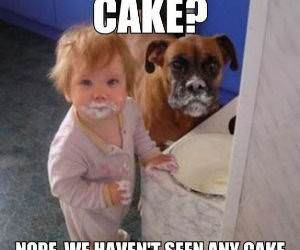 No Cake Here Funny Picture