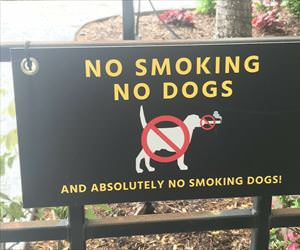 no smoking and no dogs