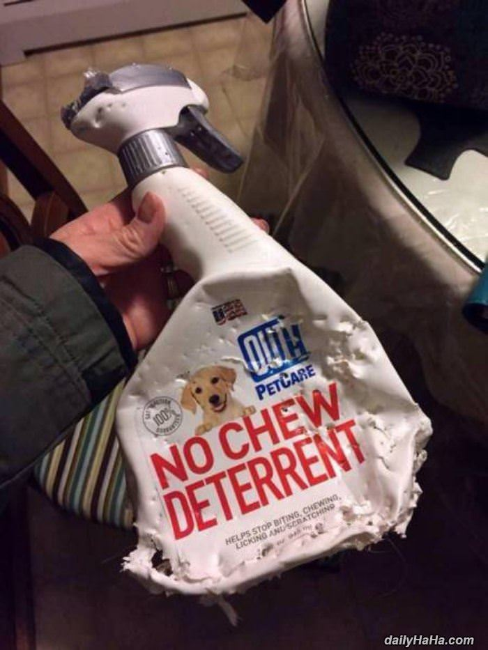 no chew deterrent funny picture