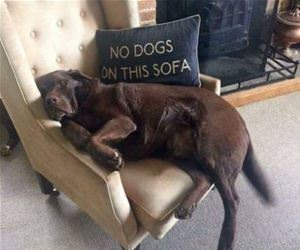 no dogs on this sofa funny picture