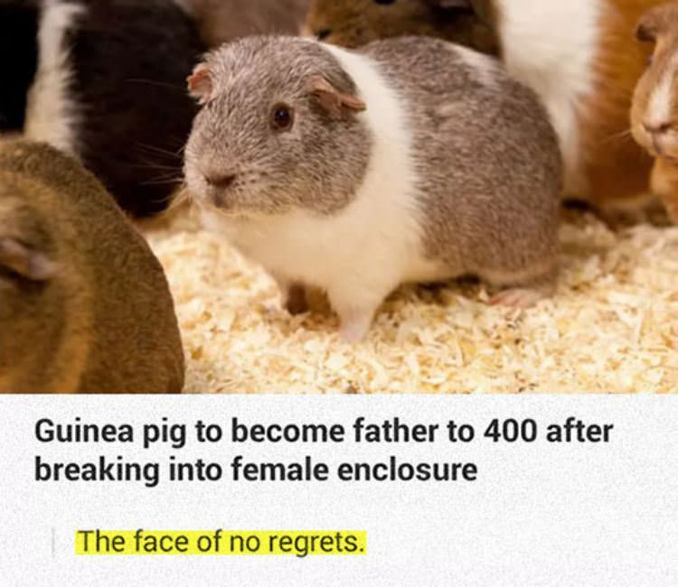 no regrets funny picture