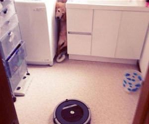 no roombas for me funny picture