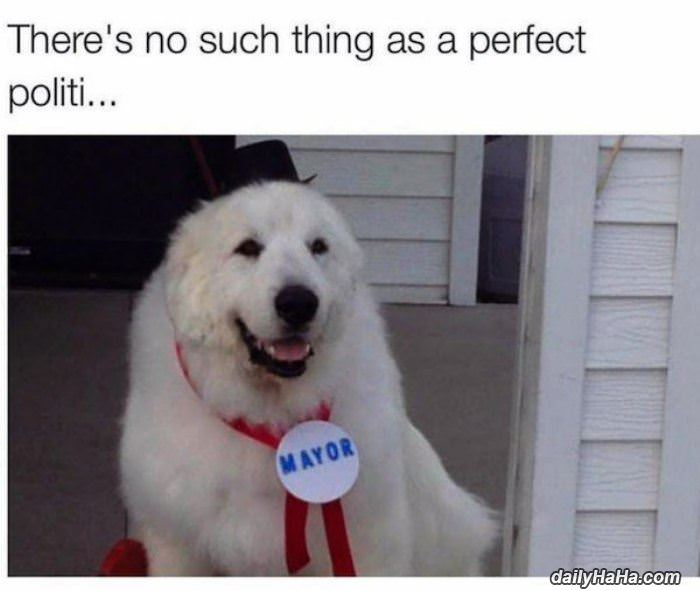 No Such Thing As The Perfect Politician No_such_thing_as_the_perfect_politician
