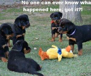 nobody can ever know funny picture