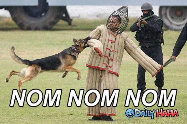 Nom Nom Nom funny picture