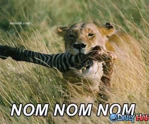 Om Nom Nom Nom funny picture