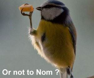 Nom or Not funny picture
