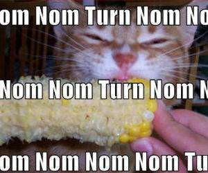 Nom and Turn