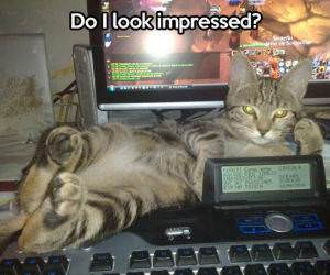 You Not Impressed Yet funny picture
