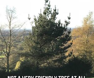 not a friendly tree funny picture