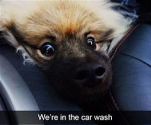not really enjoying the car wash funny picture