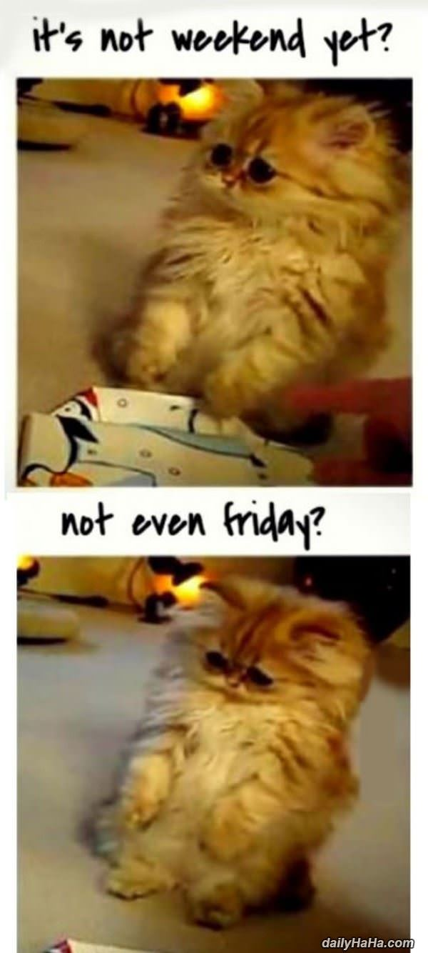 not the weekend yet funny picture