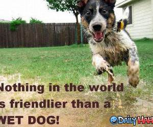 Friendly Dog funny picture