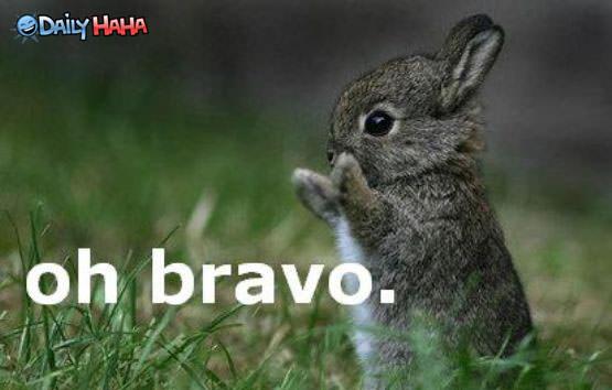Oh Bravo - Bunny