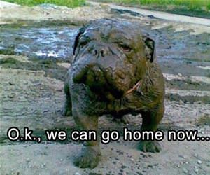 ok we can go home now funny picture