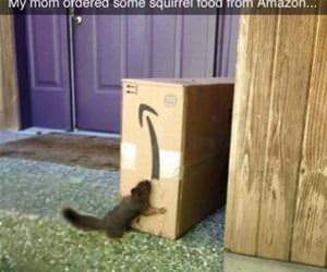 ordered squirrel food from amazon funny picture
