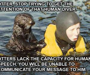 Otter Communication Pic