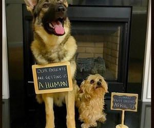 our parents are getting us a human funny picture