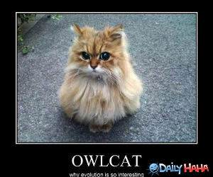 Owl Cat funny picture