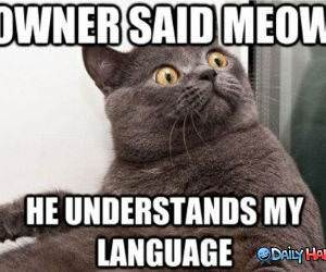 Owner Meowed funny picture