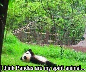 pandas are my spirit animal funny picture