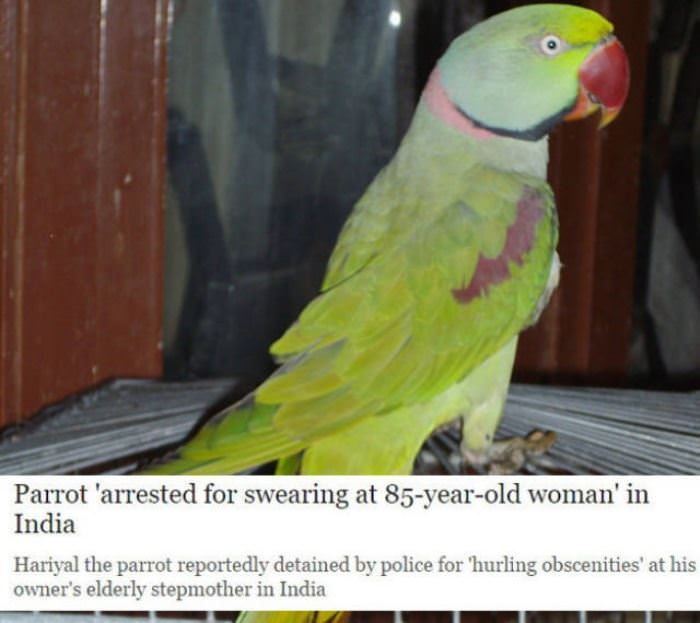 parrot arrested funny picture